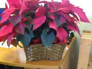 Poinsettia Wicker Basket
