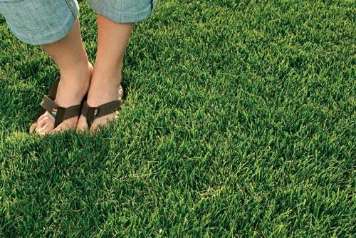 feet-in-grass