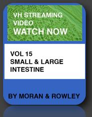 small & large intestine