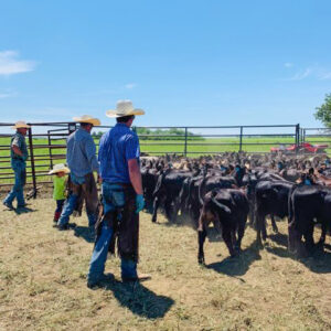 raml-working-calves