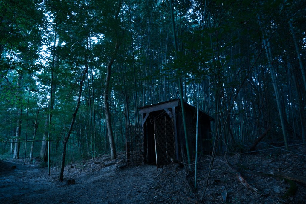 a-shed-in-the-woods-at-dusk