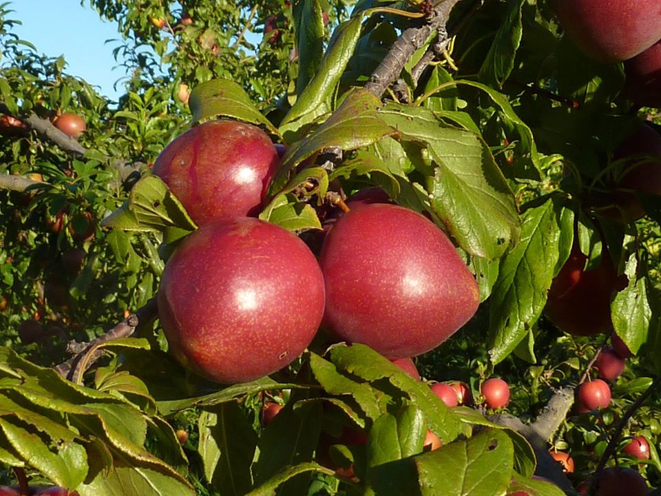 Natural, Organic And Healthy