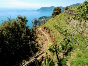 Hiking trail through vineyards in the Cinque Terre