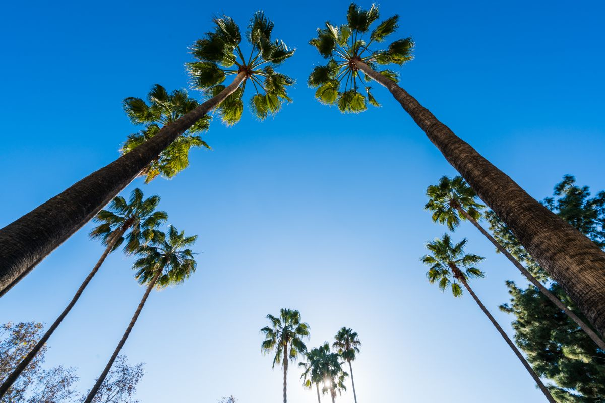 southern_california_mold_inspections