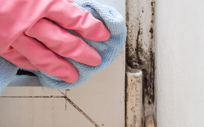 Mildew or Mold: Do the Differences Matter?