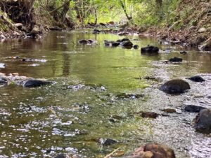 creek at Lost Indian Camp