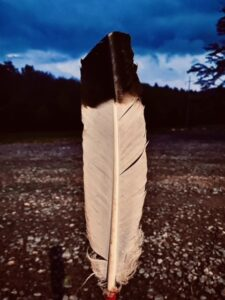 feather at Lost Indian Camp