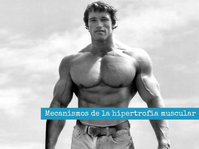 Mecanismos de la hipertrofia muscular