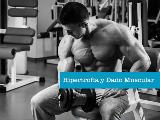 Hipertrofia-dano-muscular