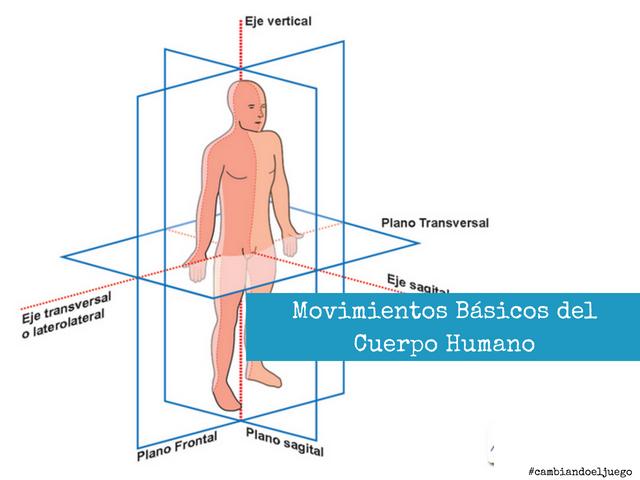 Movimientos Basicos del Cuerpo Humano