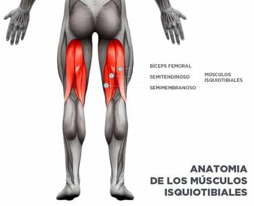 los-musculos-isquiotibiales