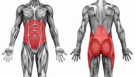 core-anatomico