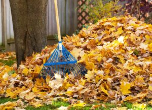 Make Raking the Yard Easier