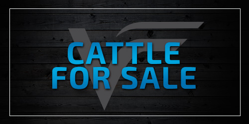 View Cattle For Sale