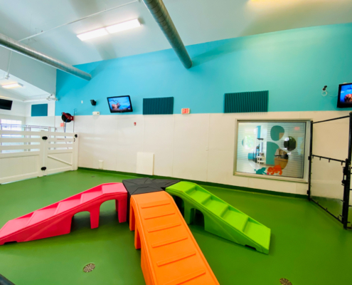 Dog Day care play area