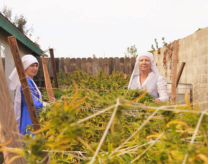 Harvest Season 2