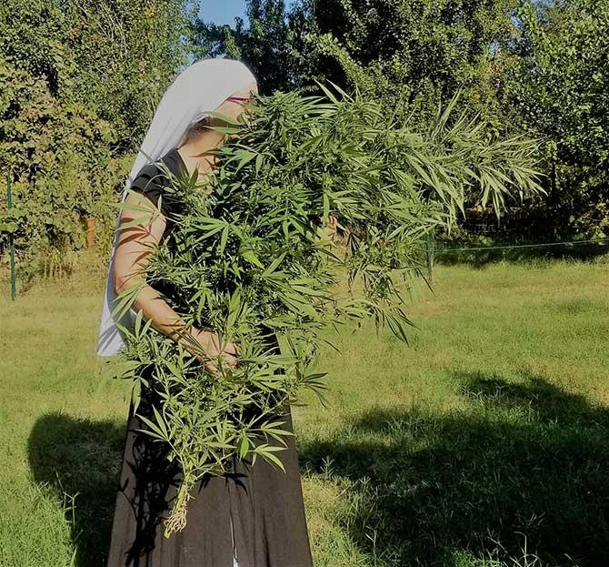 Sister Carries a Cannabis Plant