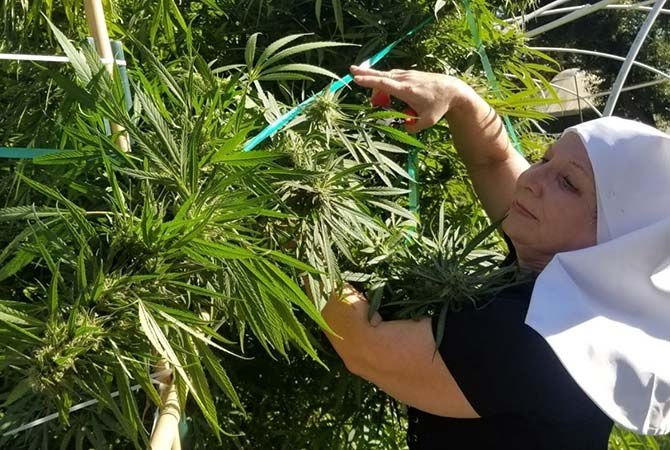 sister and cannabis plant