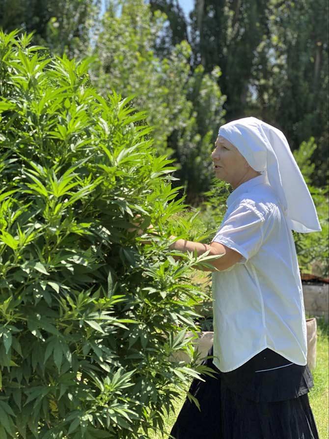 sister Kate near cannabis plant