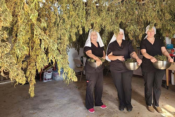 sisters hold the cannabis crop