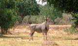 watson walker to rifa chirundu 230