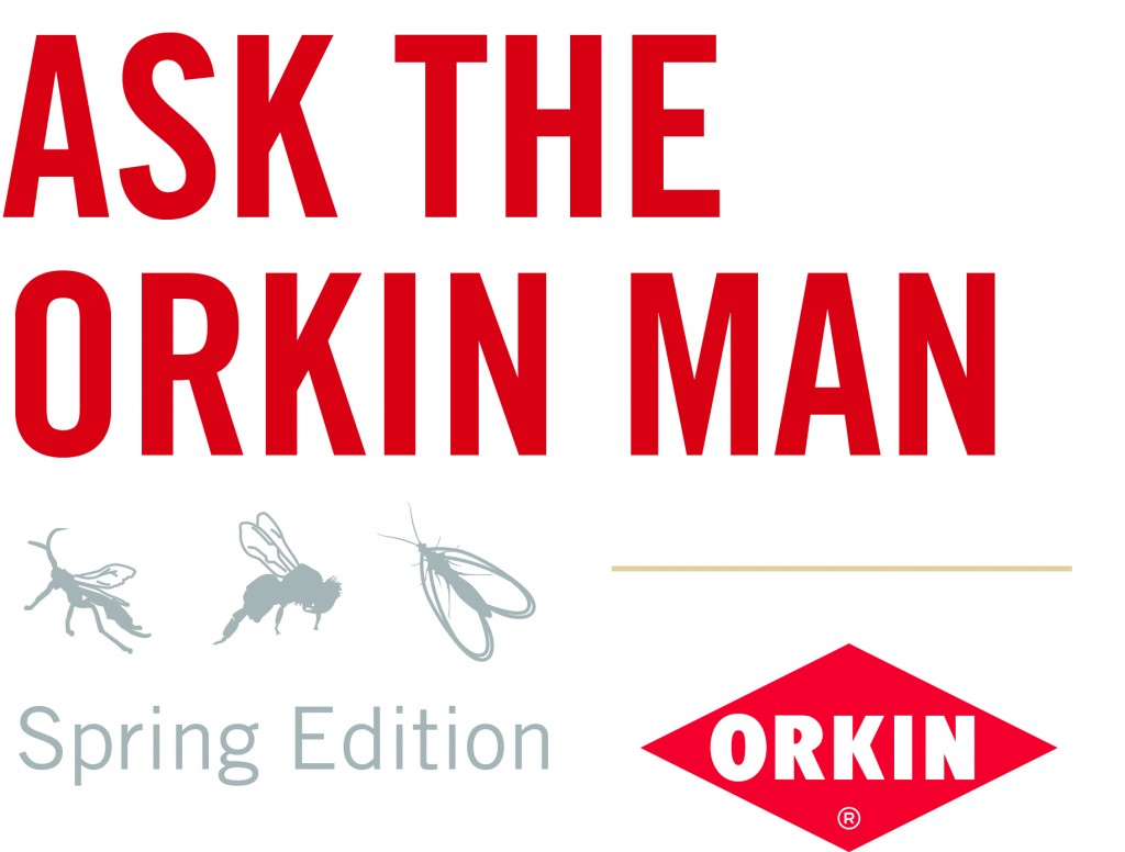 Ask the Orkin Man Spring Edition logo