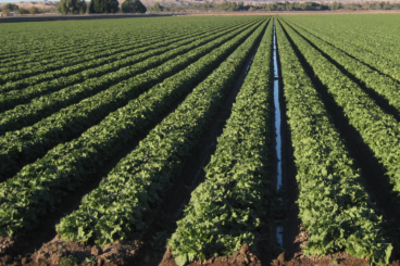 Sustainable Agriculture & Food Systems