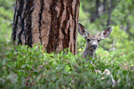Healthy Habitat & Wildlife