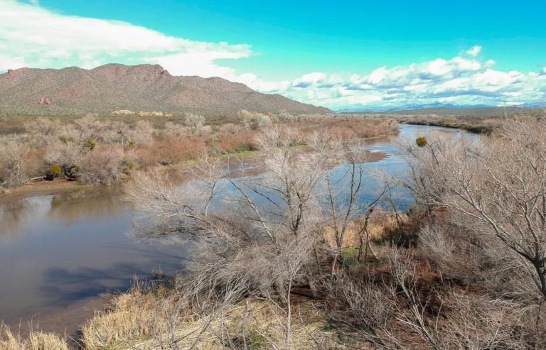 Lower Salt River Riparian Restoration Project