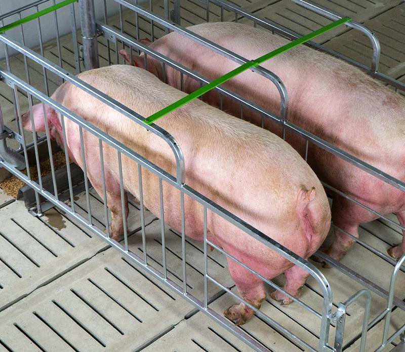 Breeding-Stall-1