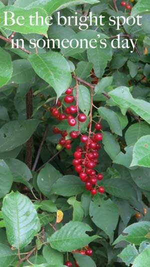 Bright red berries in nature