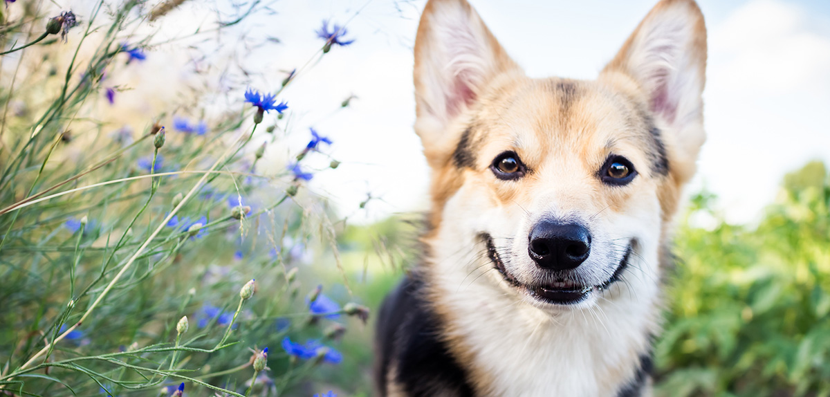 7 Feel-Good Animal Stories to Brighten Your Day