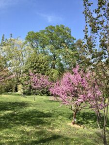 Cranaleith trees burst with spring color--bright pink blossoms and light green leaves.