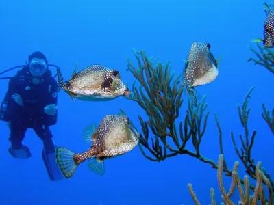 Scuba Diving Miami Beach Florida