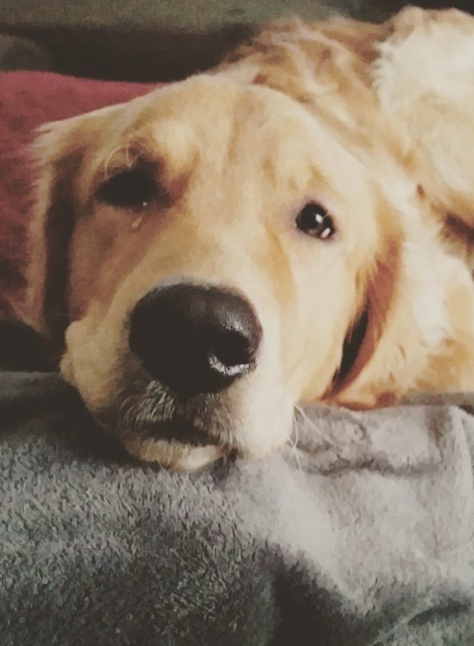 pet names,how to choose a name for your pet, what is important in naming a pet, where does your pet sleep, veterinary costs, how much to spend on your pet, your dog, dog poem, dog quote, Pet grief coach, Judy Helm Wright, artichoke press,