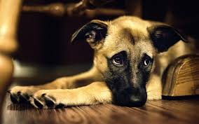 Do animal;s get depressed when their owner dies?