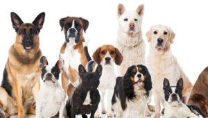 6 Dog personalitites