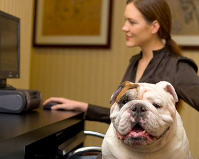 take your pet to work