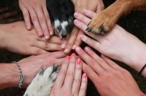 animal human bond