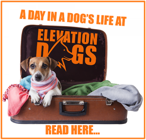 Elevation Dogs