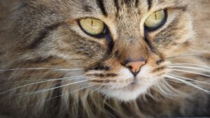 Close up photo of a cats face is a great way to show their features