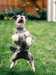 photographing a jumping dog