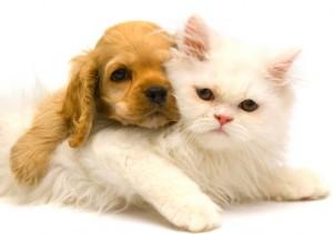 PuppyKitten