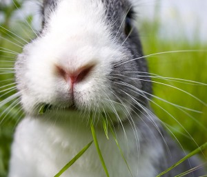 Rabbit_4blog