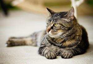 cat-4-bec-blog