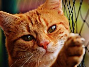 cat-4blog