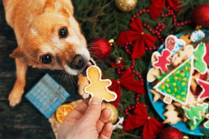 Sharing Christmas foods with your dog can be dangerous and make them sick