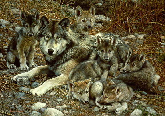 Den Mother – Wolf Family by Carl Brenders