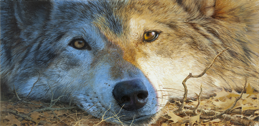 Blue and Gold Wolf by Bonnie Marris