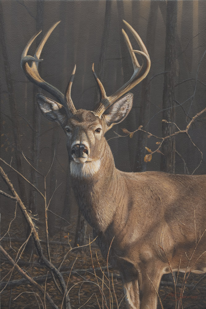 1North American – Whitetail Buck by Adam Smith